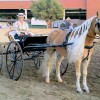 Driving Radio Show Episode 23 – Driving Haflingers in California