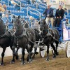 Driving Radio Show Episode 106 – Percherons and Skinny Ponies