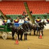 Driving Radio Show Episode 226  – Classic Re-visit:  Live From the World Percheron Congress