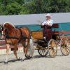 260 – The Haflinger, Driving Digest Wins Again and Wendy's Mentor Dr. Xie