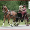 264 – Walnut Hill, Joni Kuhn and Wrecked Carriages