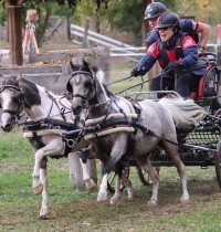 Cones Gold Medalist Mary Phelps, Chicago Carriages, Hunting Vehicles and Friesians for Nov. 7, 2019