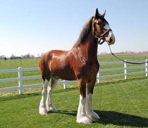 ep-299-Mark-Clydesdale-300x260 (1)